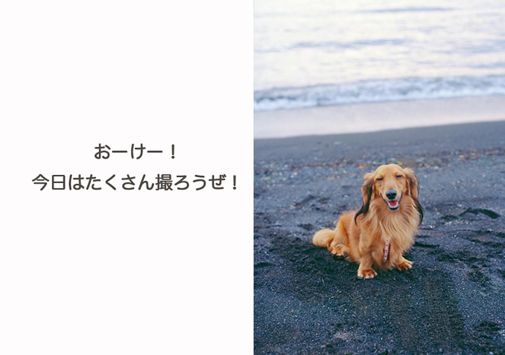 海辺で座っている犬