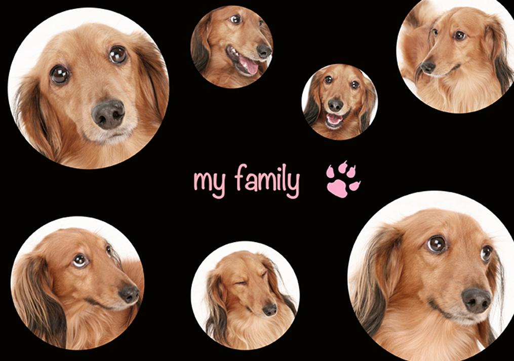 犬の顔を集めた写真